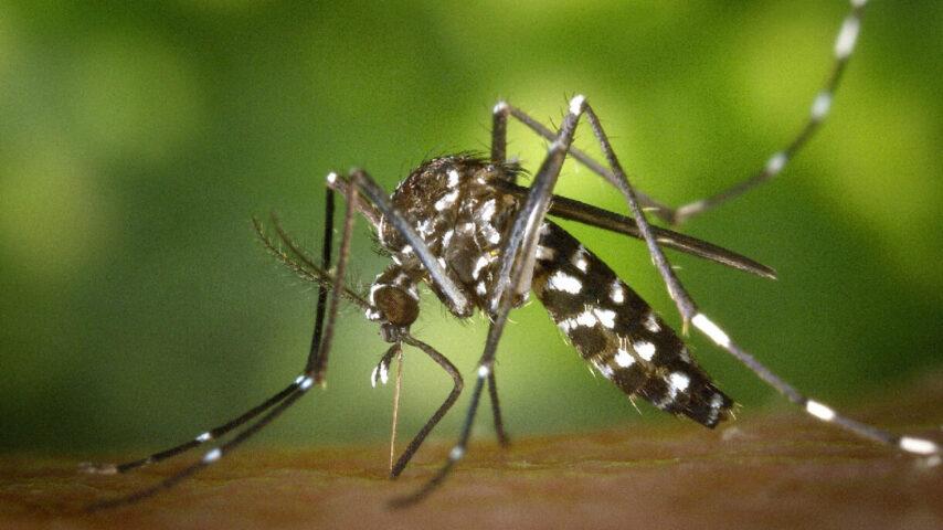como saber se estou com dengue